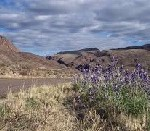 bluebonnets in Big Bend